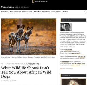 http://phenomena.nationalgeographic.com/2016/03/29/what-wildlife-shows-dont-tell-you-about-african-wild-dogs/